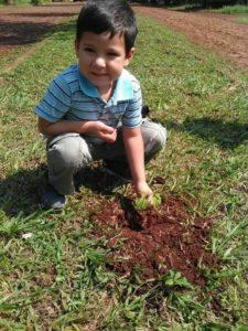 ¡siembra Un Árbol, Siembra La Vida!